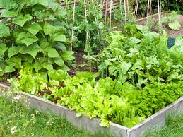 Home Gardening - Healthiest Choice?
